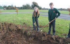 tree-planting-nov-2616